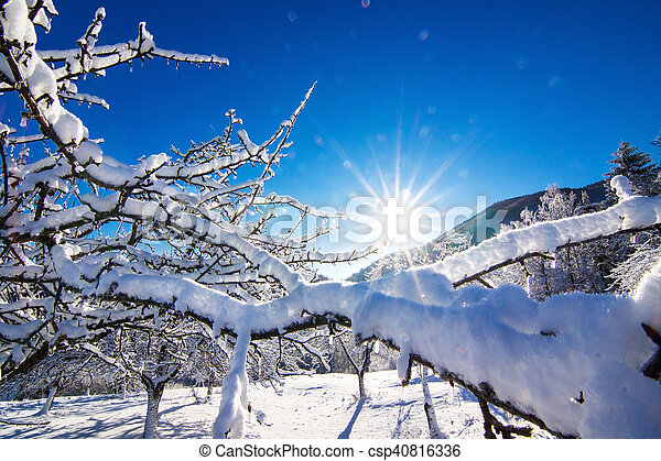 Winter landscape in the morning. - csp40816336