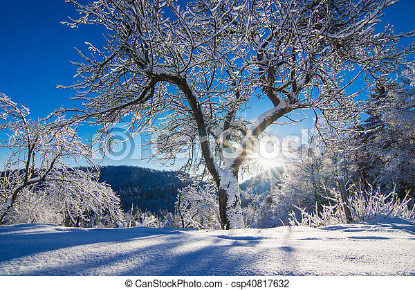 Winter landscape in the morning. - csp40817632