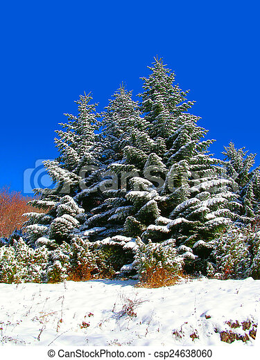 Winter landscape in the mountains - csp24638060