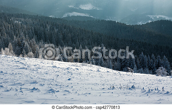 Winter landscape mountain pine forest in rays of the sun - csp42770813