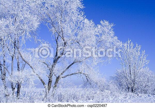 winter landscape - csp0220497