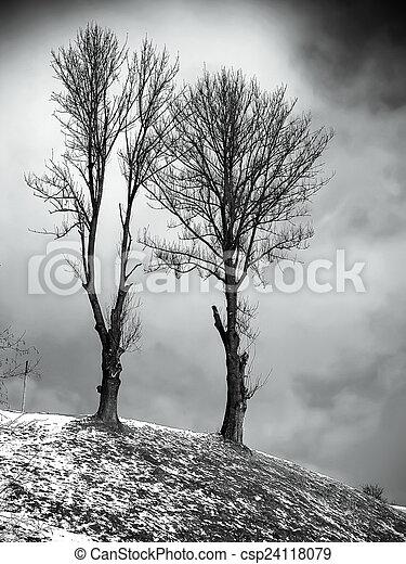Winter landscape - csp24118079