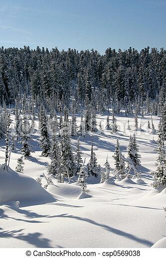 Winter Landscape - csp0569038