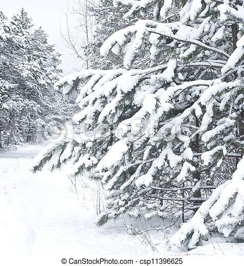 Winter landscape. Pine branch tree under snow - csp11396625