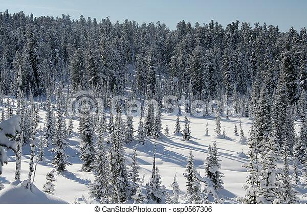 Winter Landscape - csp0567306