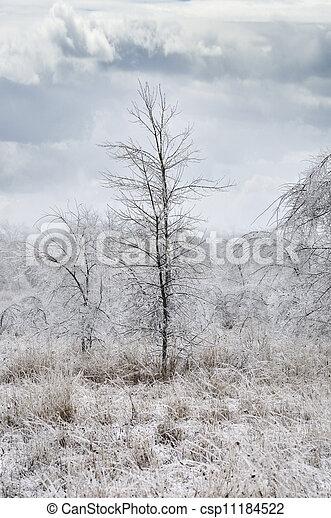 Winter Landscape - csp11184522