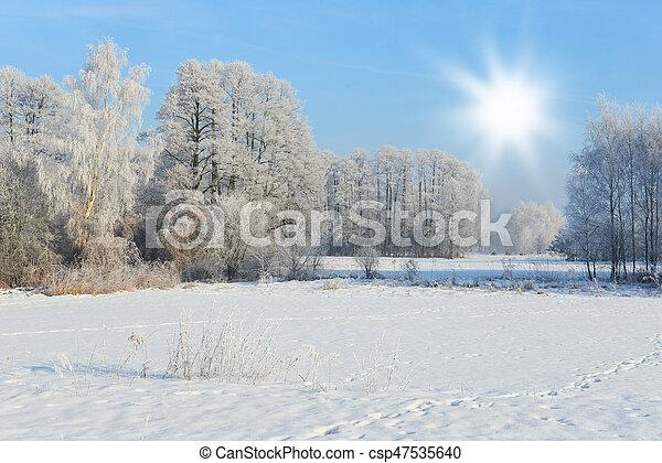 Winter landscape - csp47535640