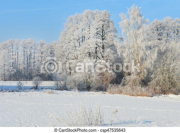 Winter landscape - csp47535643