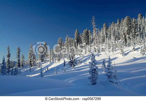 Winter Landscape - csp0567299