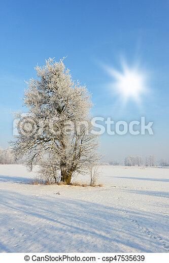 Winter landscape - csp47535639