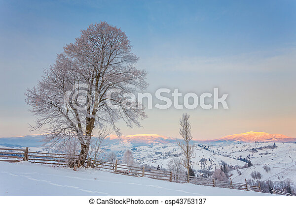 Winter landscape with lots of snow and trees - csp43753137