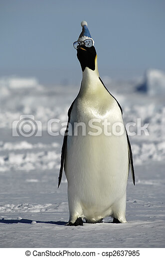 Winter penguin with sunglasses - csp2637985