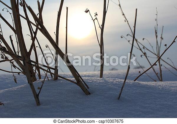 winter - csp10307675