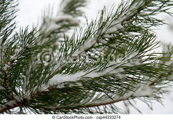 Winter - csp44333274