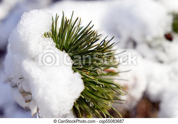 Winter - csp55083687