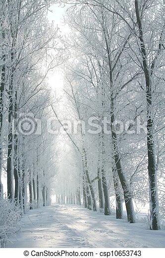 Winter rural road at dawn - csp10653743