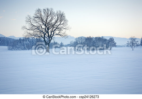 winter scenery - csp24126273