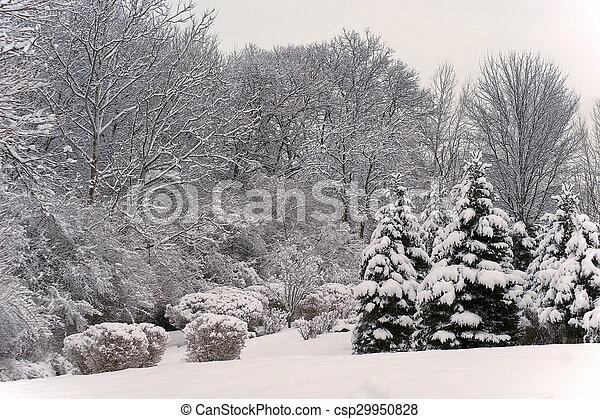 Winter Scenic Landscape - csp29950828