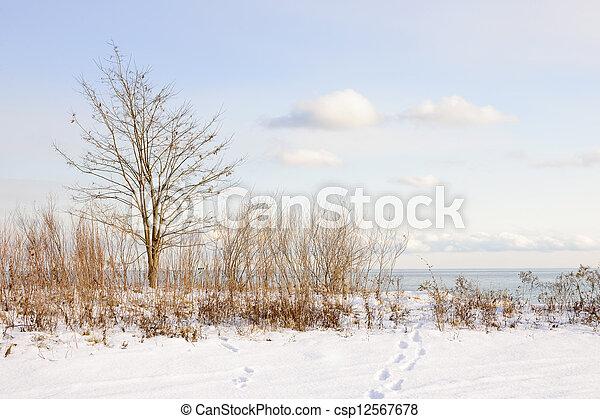 Winter shore of lake Ontario - csp12567678