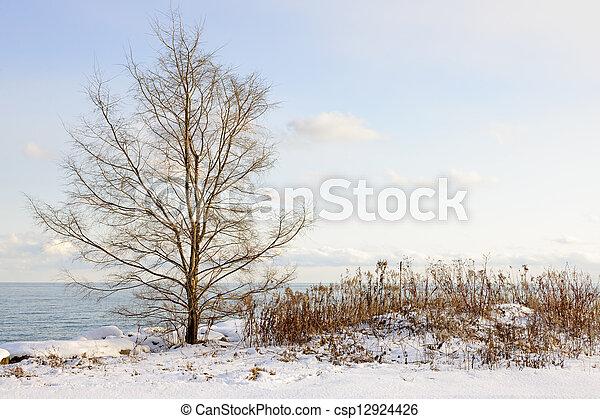 Winter shore of lake Ontario - csp12924426