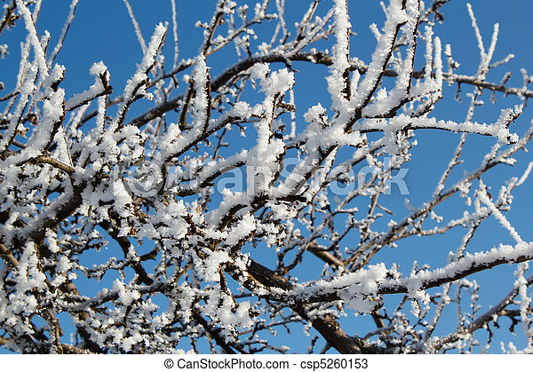 winter snow branches of tree on a blue sky - csp5260153