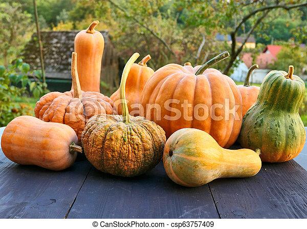 Winter squashes and pumpkins Cucurbita moschata - csp63757409