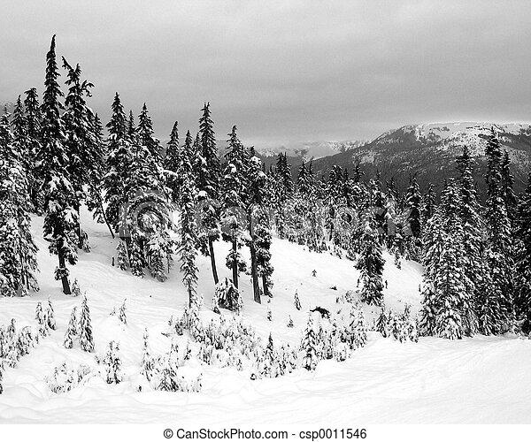 winter - csp0011546