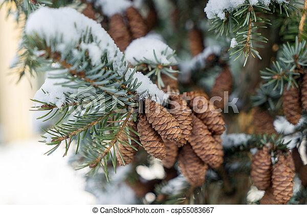 Winter - csp55083667