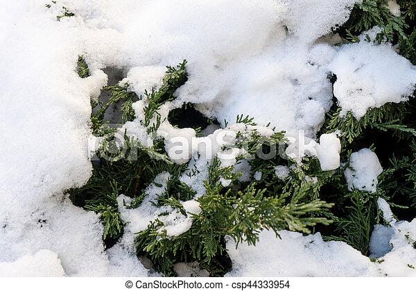 Winter - csp44333954