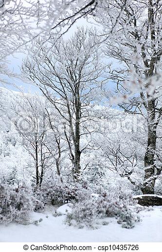Winter - csp10435726