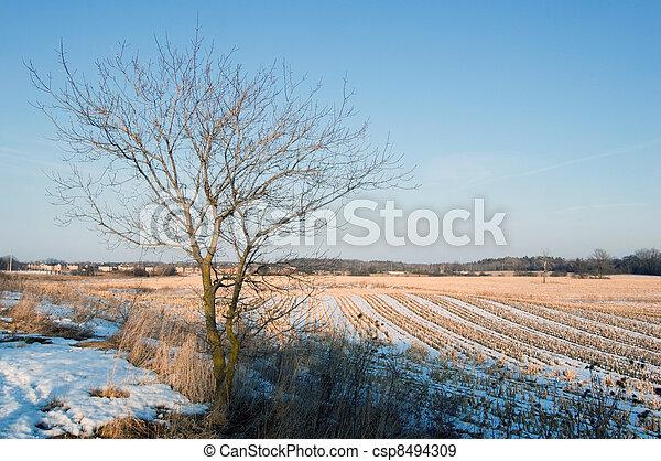 winter - csp8494309