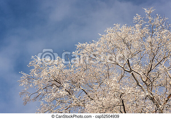 winter tree branches in the foreground - csp52504939