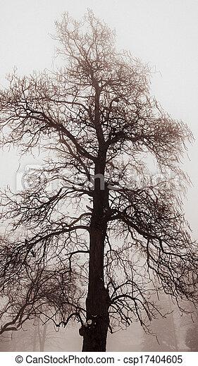 Winter tree in fog - csp17404605