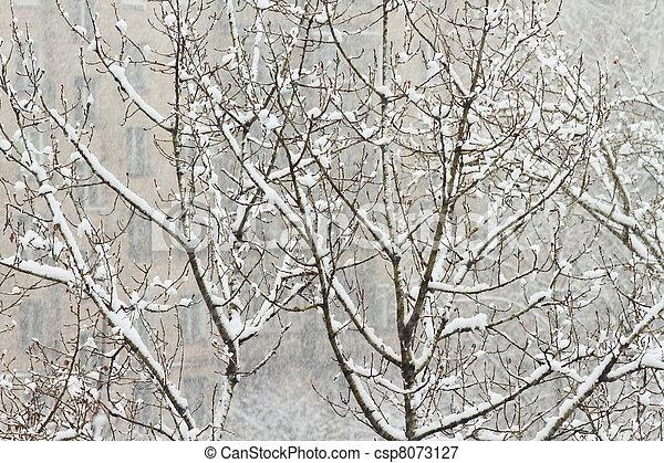 winter tree - csp8073127