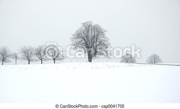 winter tree - csp0041705