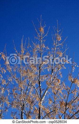 Winter Tree - csp0528034
