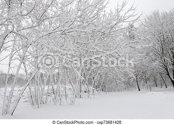 Winter trees covered in white fluffy snow - csp73681428