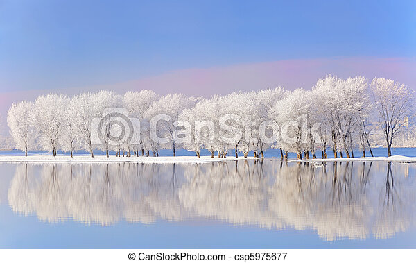 winter trees covered with frost - csp5975677