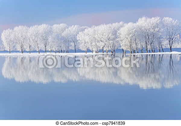 winter trees covered with frost - csp7941839