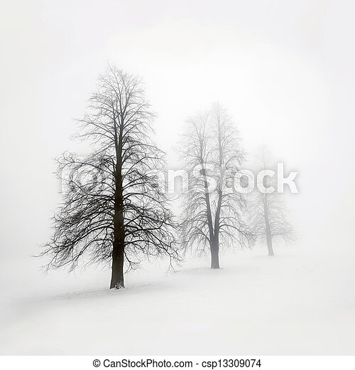 Winter trees in fog - csp13309074