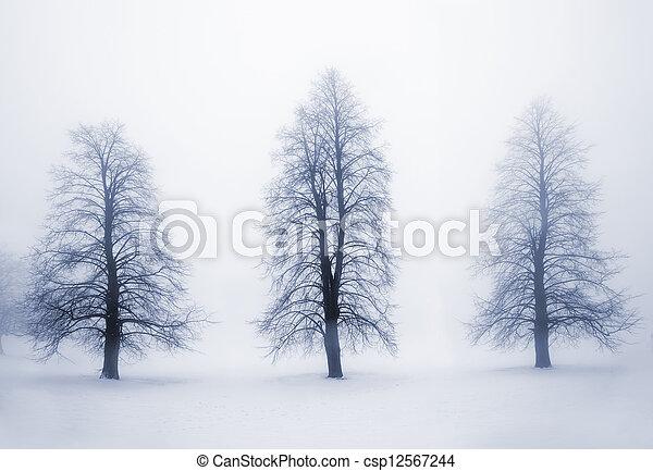 Winter trees in fog - csp12567244