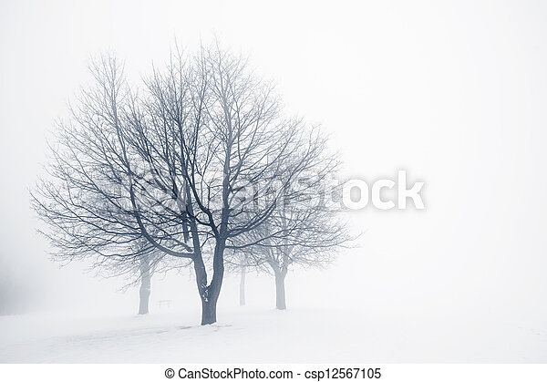 Winter trees in fog - csp12567105