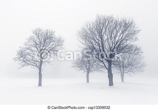 Winter trees in fog - csp13309032
