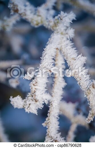 Winter trees in hoarfrost - csp86790628