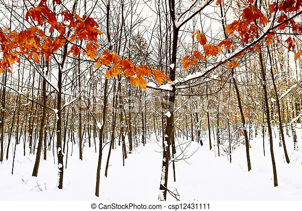 Winter trees in the snow - csp12431111