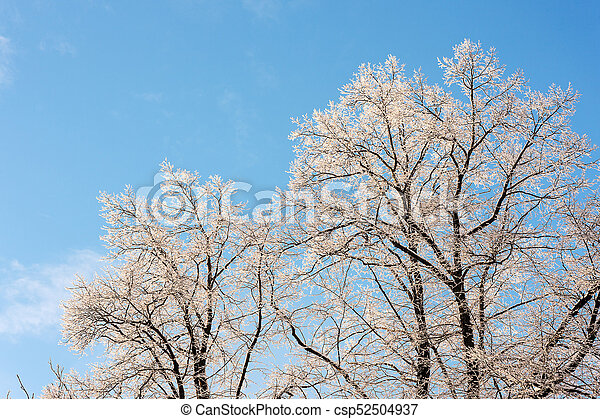winter trees in the snow - csp52504937