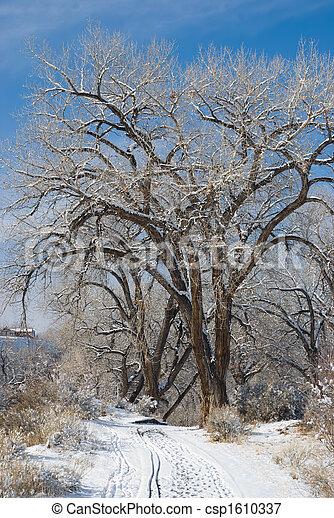 Winter Trees - csp1610337