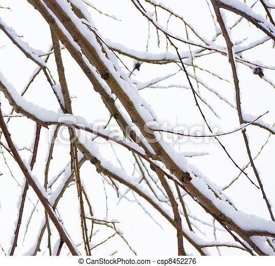 Winter trees - csp8452276