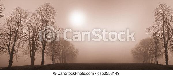 winter trees - csp0553149