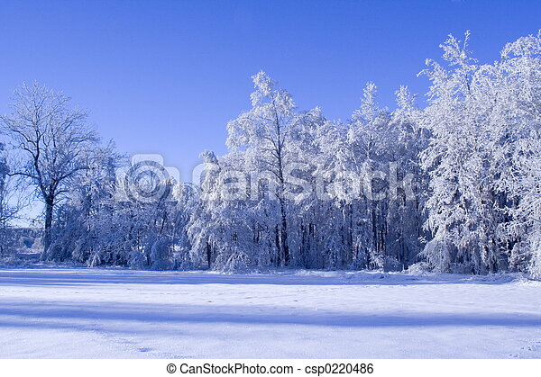 winter, wald - csp0220486